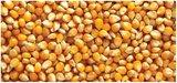 Turks mais popcorn van Sezer Agro ( 900 gram)_